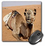 3dRose Smiling Camel Resting At Bedouin Camp In Oman Photo Mouse Pad, 8""