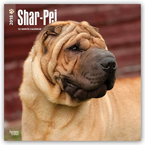Shar Pei 2018 12 x 12 Inch Monthly Square Wall Calendar, Animals Dog Breeds (Multilingual Edition)
