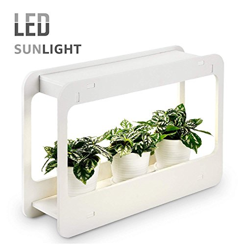 Growing Herbs With Led Lights