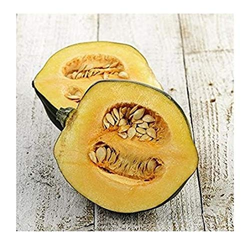 David's Garden Seeds Squash Winter Acorn Table Queen SL7433 (Multi) 25 Non-GMO, Heirloom Seeds ()