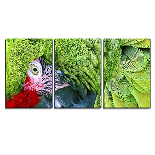 wall26 - 3 Piece Canvas Wall Art - Green Red Feathers Military Macaw Close Up Looking at You - Modern Home Decor Stretched and Framed Ready to Hang - 24
