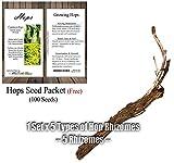 1 Set of 5 Hop Rhizomes - Humulus lupulus - Hop Root Rhizome - By MySeeds.Co (1Set of 5 Rhizomes)