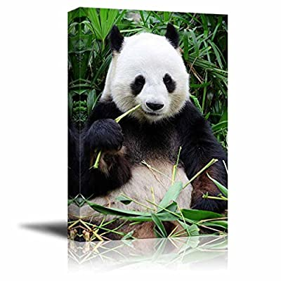 Giant Panda Eating Bamboo Photography - Canvas Art