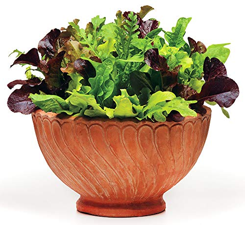 Please Read! This is A Mix!!! 300+ ORGANICALLY Grown Lettuce Mix 20 Varieties Seeds Heirloom Non-GMO. Seeds are not Individually Packaged! ()
