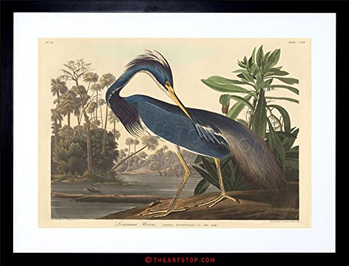 The Art Stop Painting Bird Audubon Louisiana Heron Framed Print ()