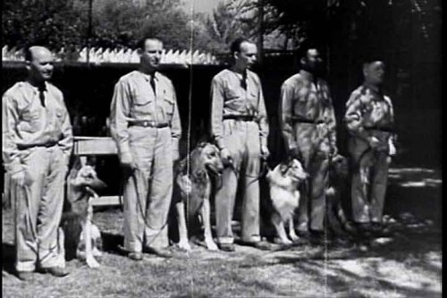 War Dogs: 1942 Army Dog Patriotic WWII Canine Drama DVD