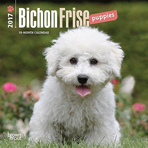 30%OFF Bichon Frise Puppies 2017 Mini Calendar 7x7 - www