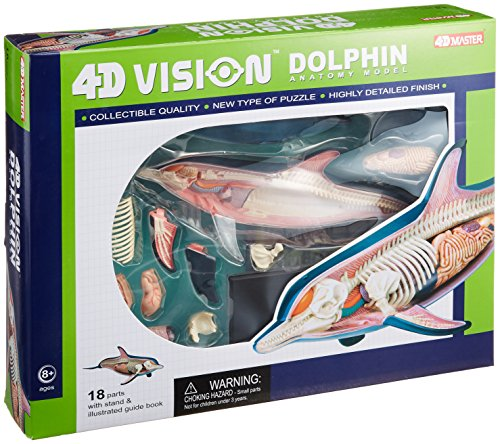 ky network Solid puzzle 4D VISION animal dissection No.07 Dolphin dissection model