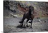 Great BIG Canvas Gallery-Wrapped Canvas entitled Icelandic Black Stallion, Iceland