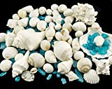 White-Decorative-Sea-Shell-with-Pearlized-Ocean-Blue-Sea-Glass-Chips-1-Pound-for-Decoration-Shells-for-Craft-Nautical-Crush-Trading-TM