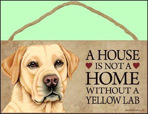 Yellow Labrador - 8