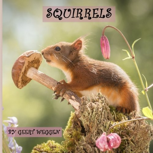 Squirrels: 52 photos of red squirrels (Two Squirrels)
