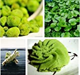Wasabi Seeds 100pcs/bag Japanese Horseradish Seeds Vegetable Wasabia Japonica Home Garden Bonsai Plants