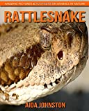 img - for Rattlesnake: Amazing Pictures & Fun Facts on Animals in Nature book / textbook / text book