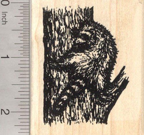 Raccoon Rubber Stamp, Tree Climbing