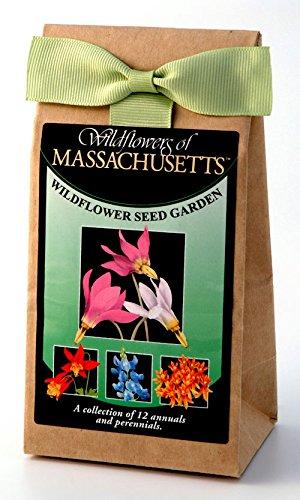 (Massachusettes Wildflowers - Seed Mix - a Beautiful Collection of Twelve annuals & perennials - Enjoy The Natural Beauty of Massachusetts Flowers in Your own Home Garden)