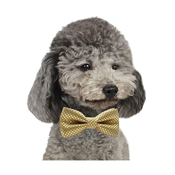 YOY Handcrafted Adorable Pet Bow Ties – 6-Pack Adjustable Neck Tie 11.4″-18.5″ Polka Dots Bowties Dog Collar Neckties Kitty Puppy Grooming Accessories for Doggy Cat, 6 Colors Click on image for further info. 7