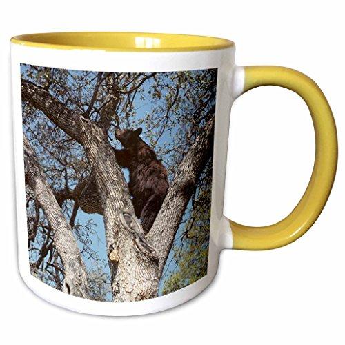 3dRose Danita Delimont - Bears - USA, California, Black Bear in Oak Tree - US05 GRE0031 - Gerry Reynolds - 11oz Two-Tone Yellow Mug (mug_142678_8) (Gerrys Christmas Tree)