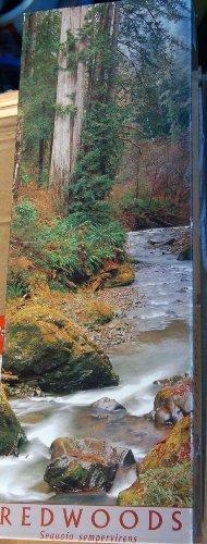 REDWOODS 12x36 Panoramic Puzzle (California Panoramic Puzzle)