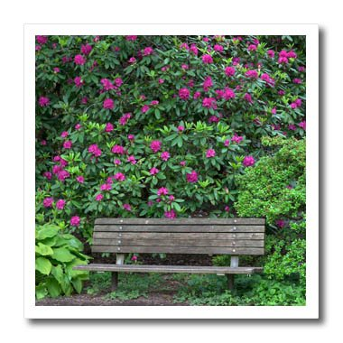 3dRose Danita Delimont - Gardens - Oregon, Portland, Purple blossoms of rhododendrons in bloom and bench. - 6x6 Iron on Heat Transfer for White Material (ht_279356_2) (Portland Blossom)