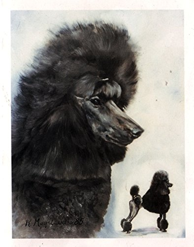 Black Poodle Double Image Notecards by Best Friends By Ruth Maystead (Image #1)