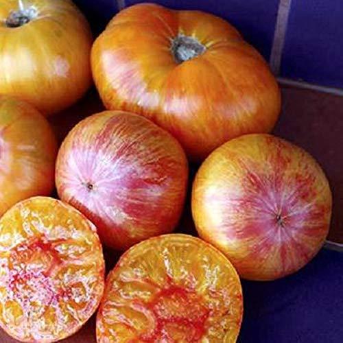 (NIKITOVKASeeds - Tomato Giant Rainbow - 40 Seeds - Organically Grown - Non GMO)
