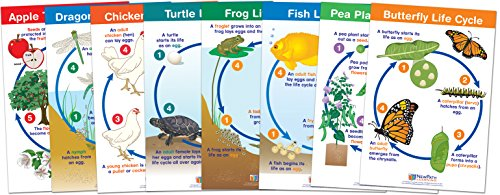 NewPath Learning 94-1504 Life Cycles Bulletin Board Chart Set (Pack of 8) (Frog Life Cycle Activities)