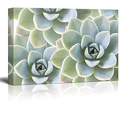 Print Succulent Plants on Retro Style Background, Quality Artwork, Alluring Visual