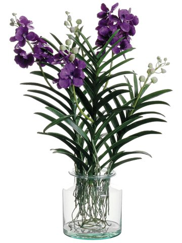32 Vanda Orchid Plant In Glass Vase Violet Amazon Kitchen
