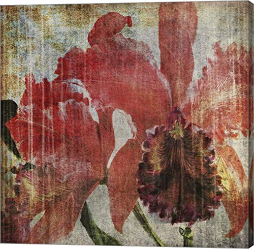 Pacific Orchid I by John Butler Canvas Art Wall Picture, Gallery Wrap, 28 x 28 inches