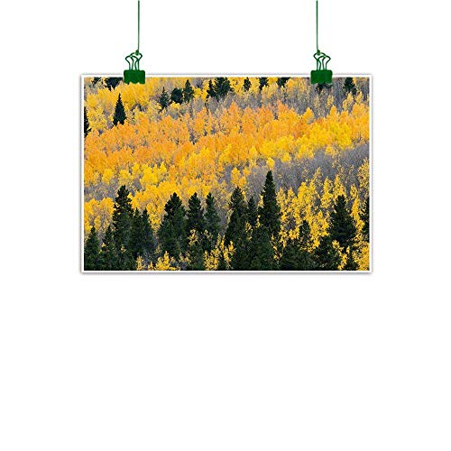 J Chief Sky Wall Art Decor Fall,Colorful Aspen Forest in Colorado Rocky Mountains Western Wilderness USA Theme,Green Yellow Grey for Office Living Room W 24