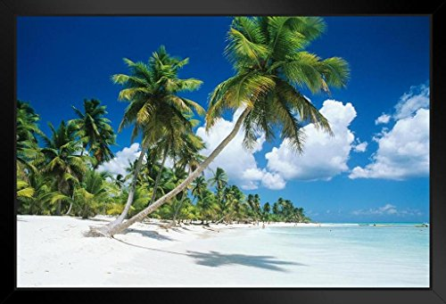 Palm Trees Beach Saona Island Dominican Republic Photo Art Print Framed Poster 20x14 inch (Daughters Of The Republic Of Texas Austin)