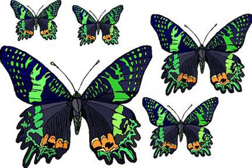 Set of 5 Black Butterflies with Green & Orange - Vinyl Stain