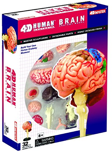 compare price  brain model for kids