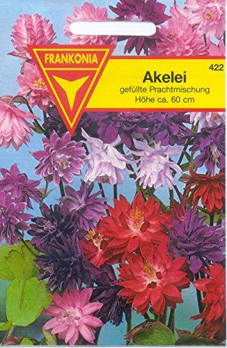Akelei 18 blau gefüllt ca 200 Samen