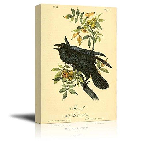 beautiful illustration of a raven by john james audubon