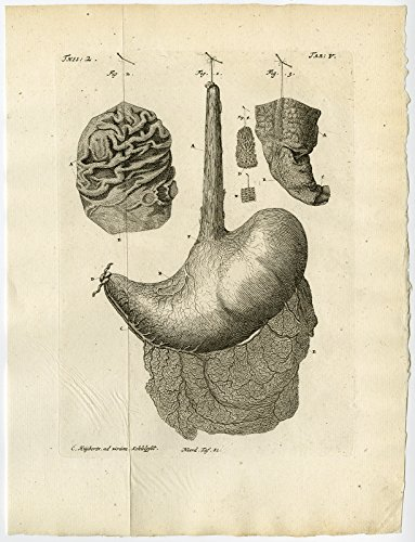 Price comparison product image Antique Print-STOMACH-ESOPHAGUS-MUCOUS MEMBRANE-TAB 5-Ruysch-Huyberts-1744