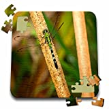 Boehm Photography Insect - A green dragonfly on a cat tail stem - 10x10 Inch Puzzle (pzl_245575_2)