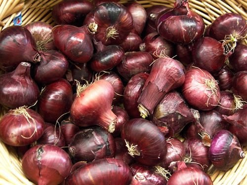 Organic Heirloom Red Cippollini Onion 200 Seeds By Jays Seeds UPC 643451295658 Short Day (Red Onion Vegetable)