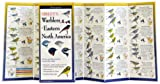 Sibley's Warblers of Eastern N. America, David Sibley, 1935380559