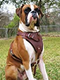 Dean and Tyler The Boss Nickel Hardware Leather Dog Harness, Brown, Medium – Fits Girth Size: 28-Inch to 37-Inch, My Pet Supplies