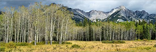 Aspen Trees with Mountains in The Background, Bow Valley Parkway, Banff National Park, Alberta, Canada by Panoramic Images Laminated Art Print, 51 x 17 - Parkway Bow Valley