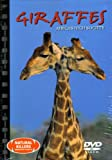 Giraffes Africa's High Society (Natural Killers Predators Close Up, 33)