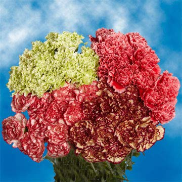 Purple Carnations 400 Prices All Included by Global Rose (Image #4)