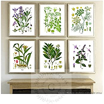 This Item Herbs Kitchen Wall Decor Set Of 6 Unframed Culinary Herbs Botanical Art Prints Kitchen Decor Dining Room Decor