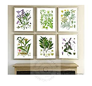 Herbs kitchen wall decor set of 6 unframed for Dining room wall art amazon