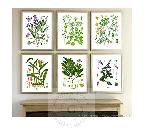 Herbs Kitchen Wall Decor Set of 6 Unframed Culinary Herbs Bo
