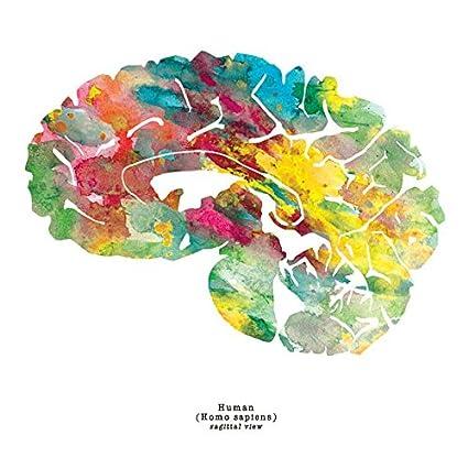 Amazon j sayuri sagittal human brain art print 85 x 85 j sayuri sagittal human brain art print 85quot x 85quot thoughtful ccuart Gallery