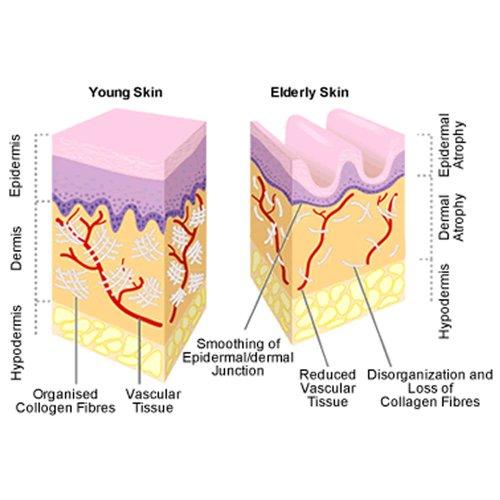 Best Natural Anti Wrinkle Ingredients