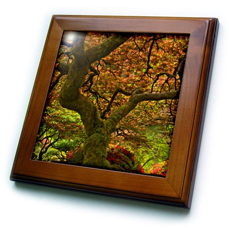 (3dRose Maple, Japanese Garden, Portland, Oregon, USA-Framed Tile, 8 by 8-inch (ft_210005_1))
